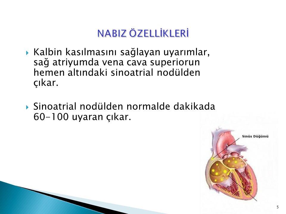  Kalbin kasılmasını sağlayan uyarımlar, sağ atriyumda vena cava superiorun hemen altındaki sinoatrial nodülden çıkar.  Sinoatrial nodülden normalde