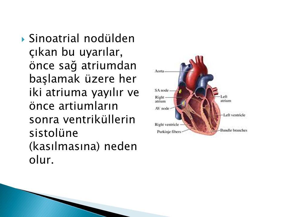  Sinoatrial nodülden çıkan bu uyarılar, önce sağ atriumdan başlamak üzere her iki atriuma yayılır ve önce artiumların sonra ventriküllerin sistolüne