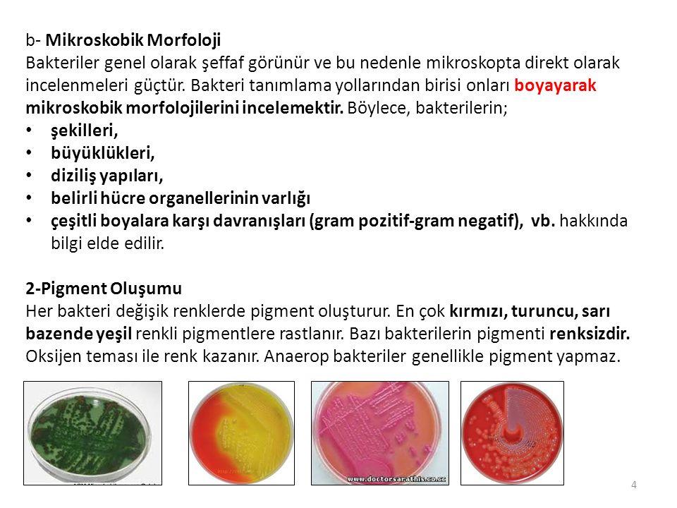 b- Mikroskobik Morfoloji Bakteriler genel olarak şeffaf görünür ve bu nedenle mikroskopta direkt olarak incelenmeleri güçtür. Bakteri tanımlama yollar