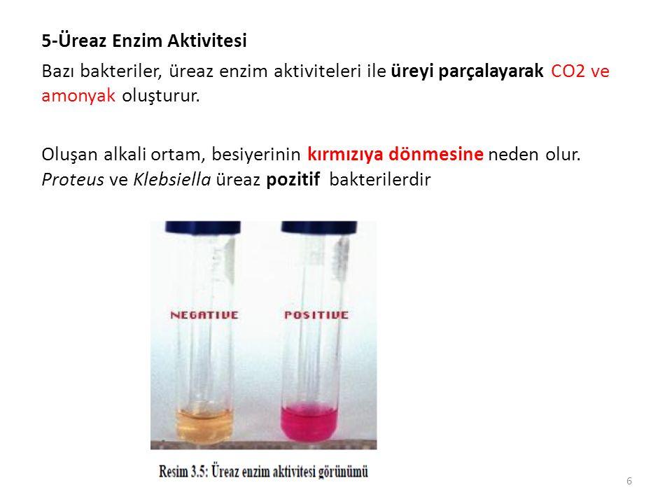 5-Üreaz Enzim Aktivitesi Bazı bakteriler, üreaz enzim aktiviteleri ile üreyi parçalayarak CO2 ve amonyak oluşturur. Oluşan alkali ortam, besiyerinin k