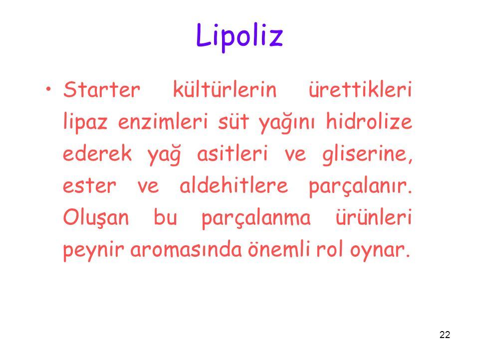 22 Lipoliz Starter kültürlerin ürettikleri lipaz enzimleri süt yağını hidrolize ederek yağ asitleri ve gliserine, ester ve aldehitlere parçalanır. Olu
