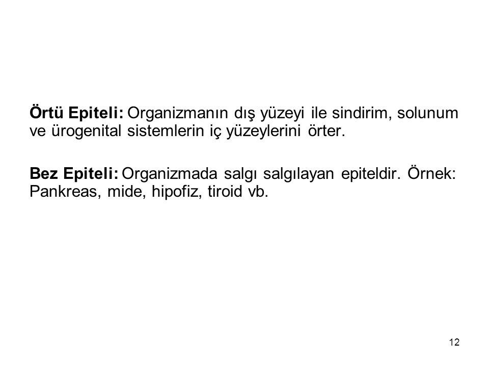 Örtü Epiteli: Organizmanın dış yüzeyi ile sindirim, solunum ve ürogenital sistemlerin iç yüzeylerini örter. Bez Epiteli: Organizmada salgı salgılayan