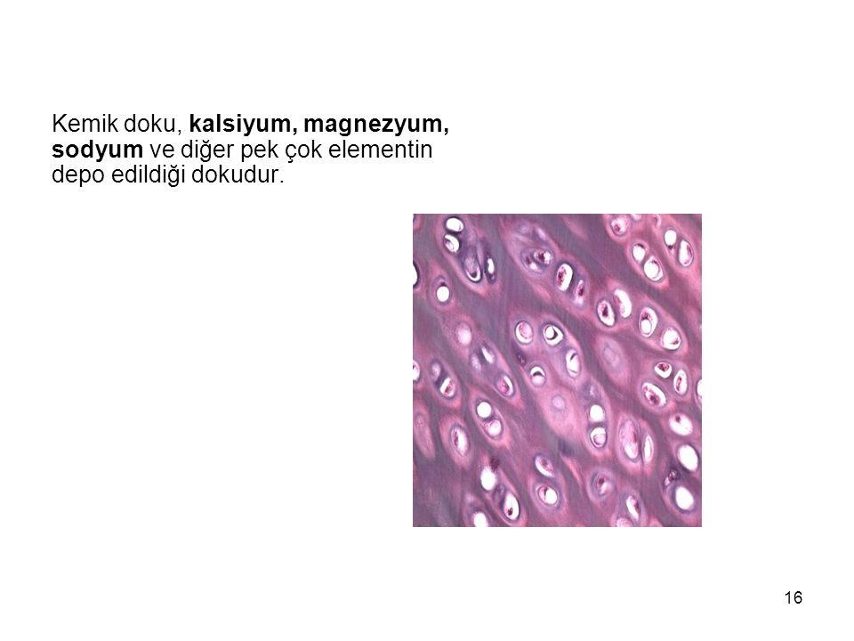 Kemik doku, kalsiyum, magnezyum, sodyum ve diğer pek çok elementin depo edildiği dokudur. 16