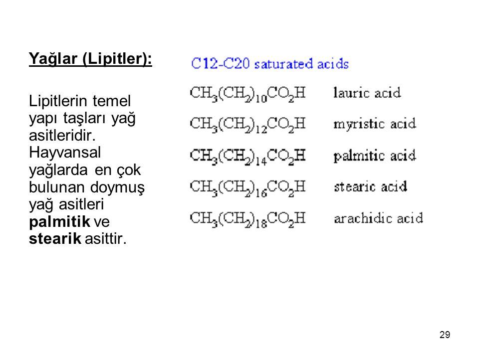 Yağlar (Lipitler): Lipitlerin temel yapı taşları yağ asitleridir.