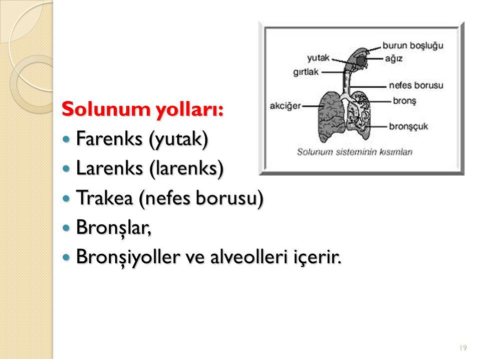 Solunum yolları: Farenks (yutak) Farenks (yutak) Larenks (larenks) Larenks (larenks) Trakea (nefes borusu) Trakea (nefes borusu) Bronşlar, Bronşlar, Bronşiyoller ve alveolleri içerir.