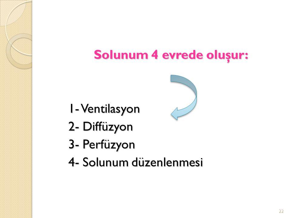 Solunum 4 evrede oluşur: 1- Ventilasyon 1- Ventilasyon 2- Diffüzyon 2- Diffüzyon 3- Perfüzyon 3- Perfüzyon 4- Solunum düzenlenmesi 4- Solunum düzenlenmesi 22
