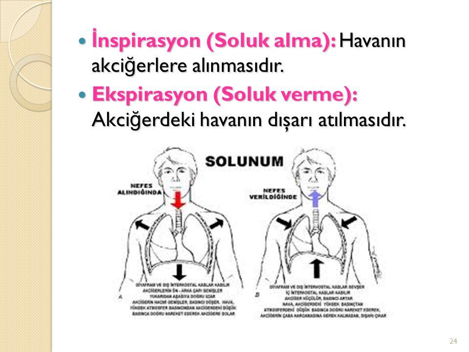 İ nspirasyon (Soluk alma): Havanın akci ğ erlere alınmasıdır.
