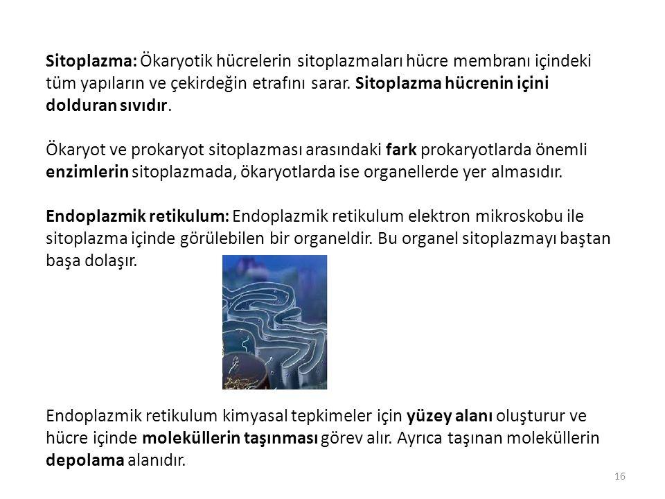 Sitoplazma: Ökaryotik hücrelerin sitoplazmaları hücre membranı içindeki tüm yapıların ve çekirdeğin etrafını sarar. Sitoplazma hücrenin içini dolduran