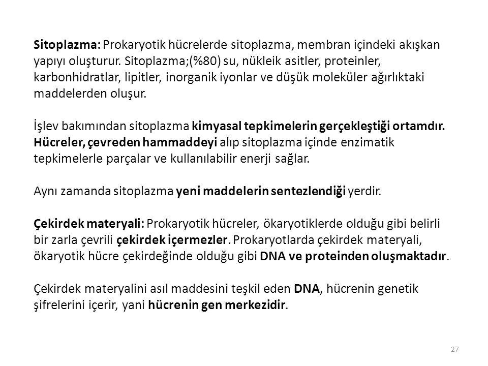 Sitoplazma: Prokaryotik hücrelerde sitoplazma, membran içindeki akışkan yapıyı oluşturur. Sitoplazma;(%80) su, nükleik asitler, proteinler, karbonhidr