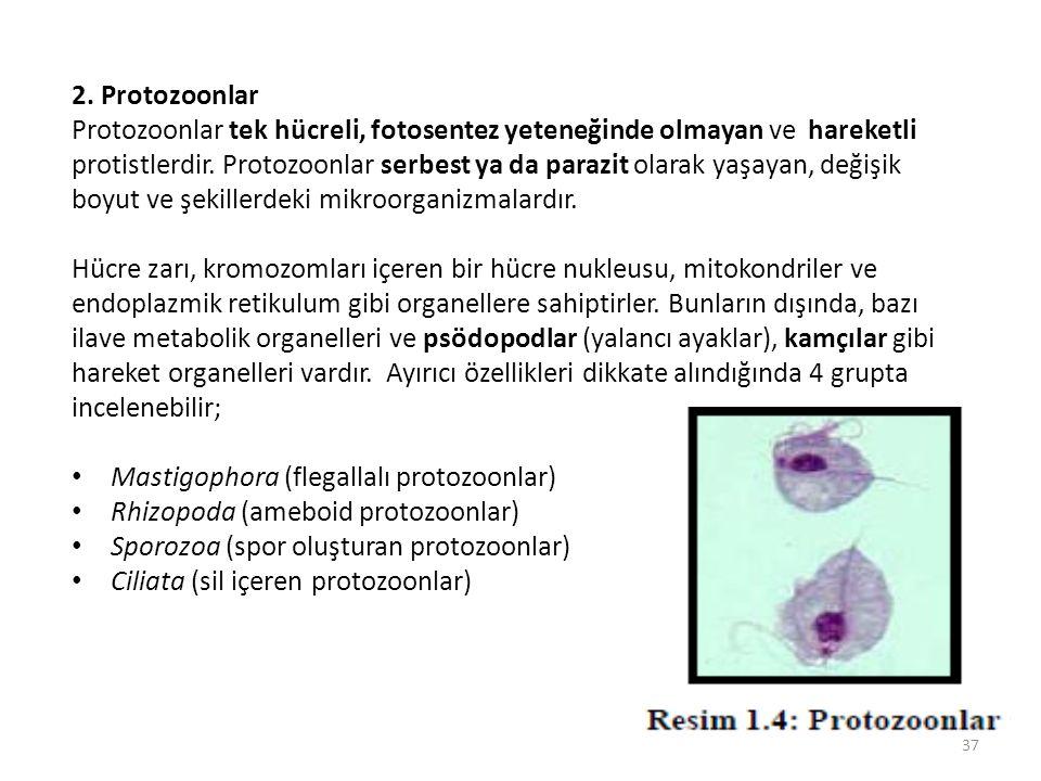 2. Protozoonlar Protozoonlar tek hücreli, fotosentez yeteneğinde olmayan ve hareketli protistlerdir. Protozoonlar serbest ya da parazit olarak yaşayan