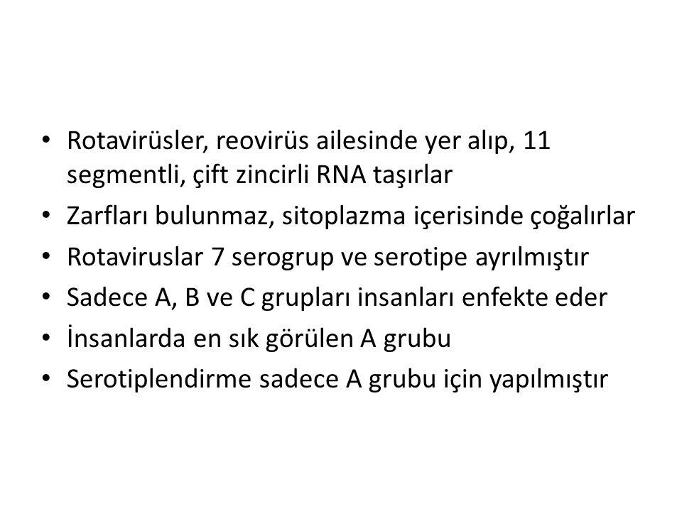Rotavirüsler, reovirüs ailesinde yer alıp, 11 segmentli, çift zincirli RNA taşırlar Zarfları bulunmaz, sitoplazma içerisinde çoğalırlar Rotaviruslar 7