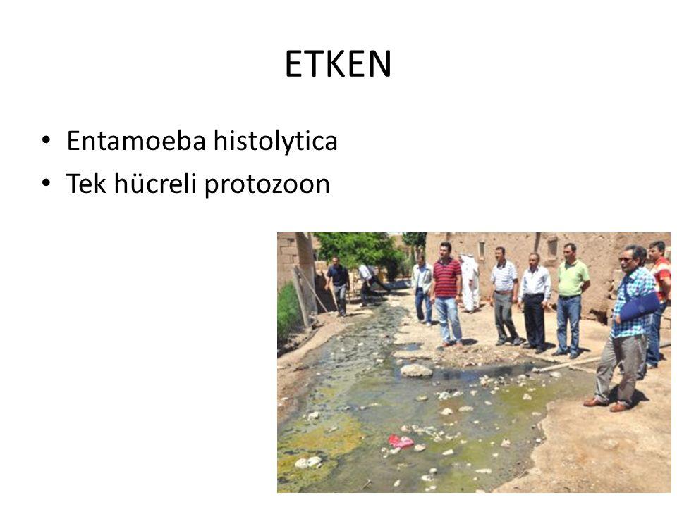ETKEN Entamoeba histolytica Tek hücreli protozoon