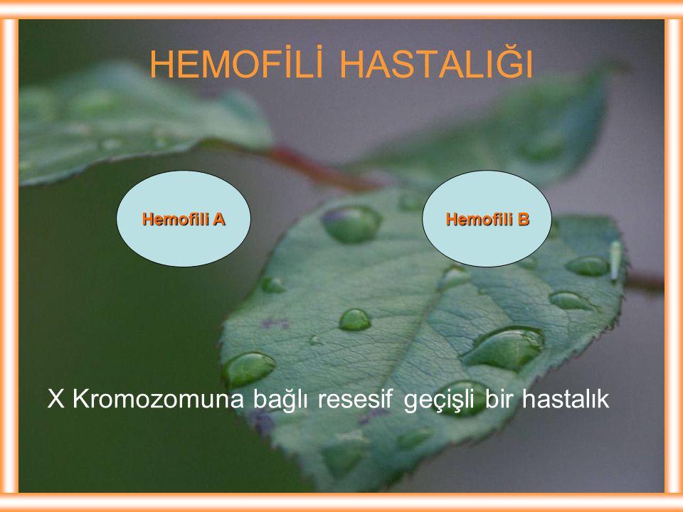 HEMOFİLİ HASTALIĞI Hemofili A Hemofili B X Kromozomuna bağlı resesif geçişli bir hastalık