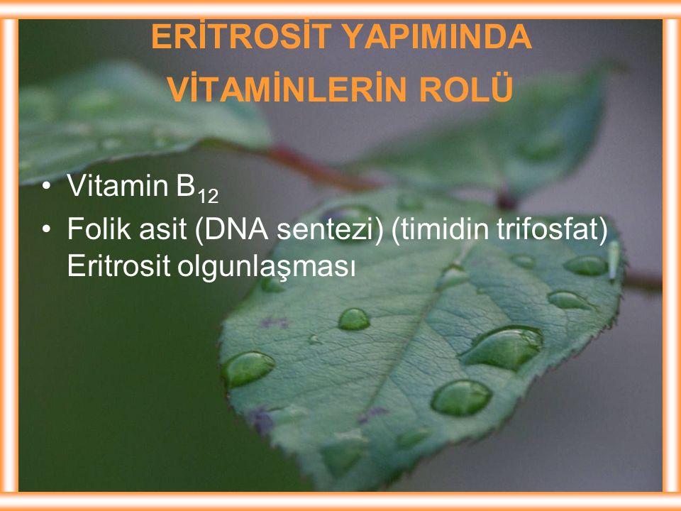 ERİTROSİT YAPIMINDA VİTAMİNLERİN ROLÜ Vitamin B 12 Folik asit (DNA sentezi) (timidin trifosfat) Eritrosit olgunlaşması