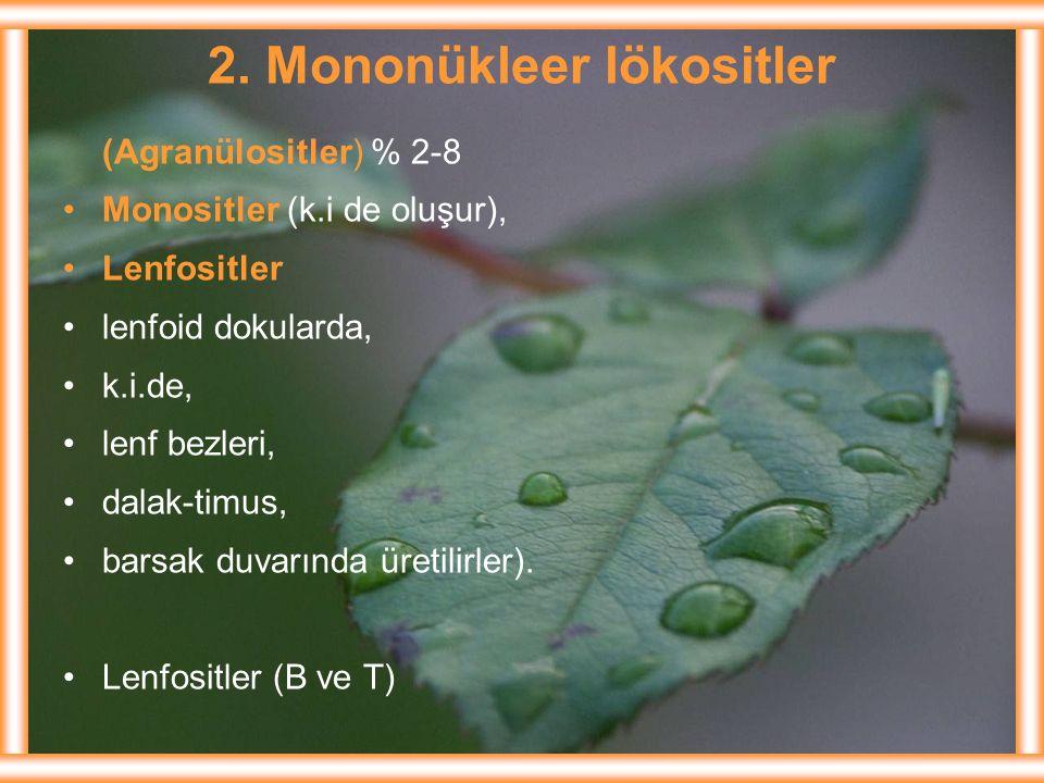 2. Mononükleer lökositler (Agranülositler) % 2-8 Monositler (k.i de oluşur), Lenfositler lenfoid dokularda, k.i.de, lenf bezleri, dalak-timus, barsak