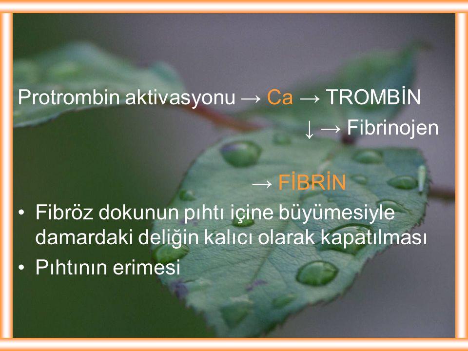 Protrombin aktivasyonu → Ca → TROMBİN ↓ → Fibrinojen → FİBRİN Fibröz dokunun pıhtı içine büyümesiyle damardaki deliğin kalıcı olarak kapatılması Pıhtı