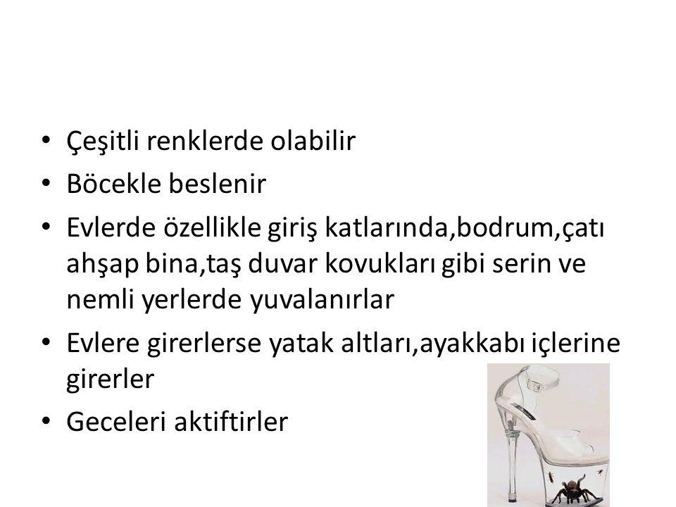 FORMİCİDAE