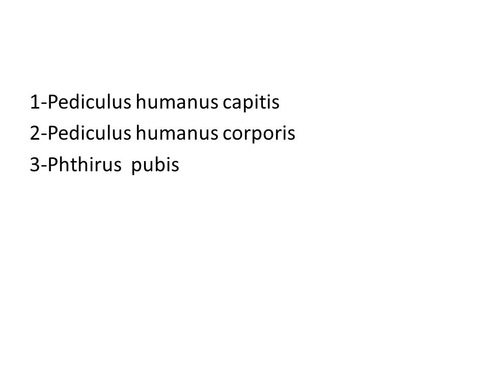 1-Pediculus humanus capitis 2-Pediculus humanus corporis 3-Phthirus pubis