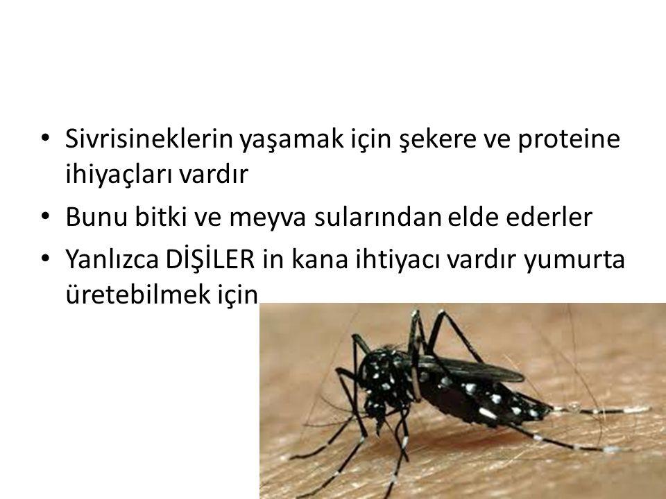Sivrisineklerin yaşamak için şekere ve proteine ihiyaçları vardır Bunu bitki ve meyva sularından elde ederler Yanlızca DİŞİLER in kana ihtiyacı vardır yumurta üretebilmek için