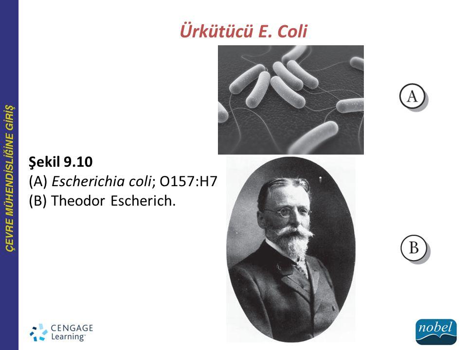 Ürkütücü E. Coli Şekil 9.10 (A) Escherichia coli; O157:H7 (B) Theodor Escherich.