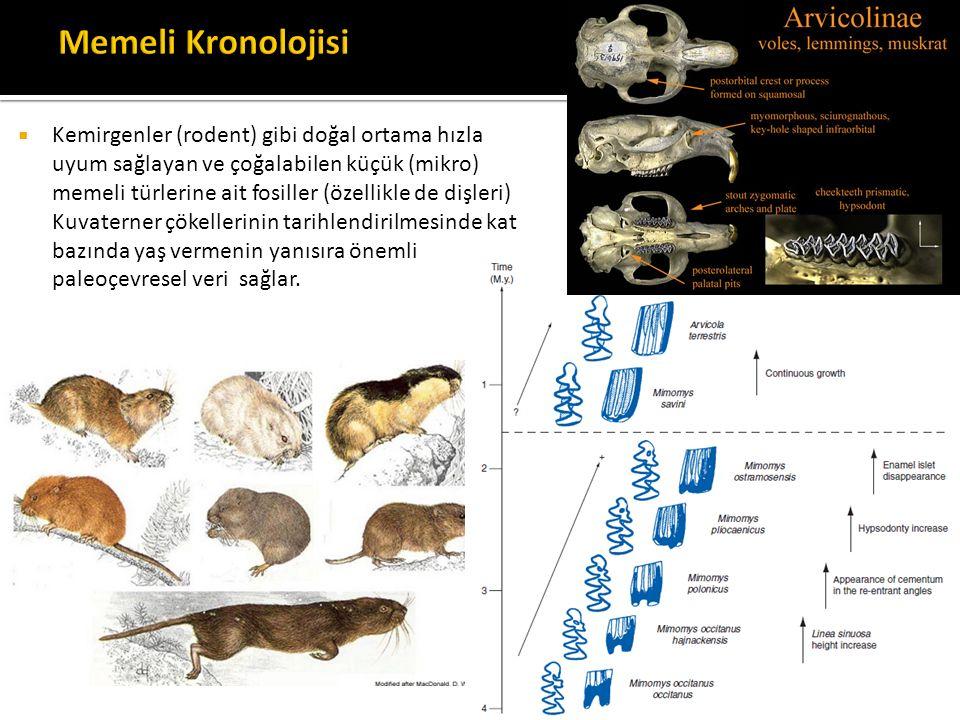  Kemirgenler (rodent) gibi doğal ortama hızla uyum sağlayan ve çoğalabilen küçük (mikro) memeli türlerine ait fosiller (özellikle de dişleri) Kuvater