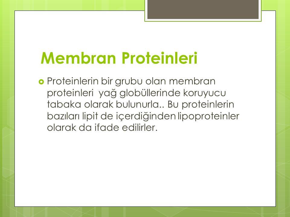 Membran Proteinleri  Proteinlerin bir grubu olan membran proteinleri yağ globüllerinde koruyucu tabaka olarak bulunurla..