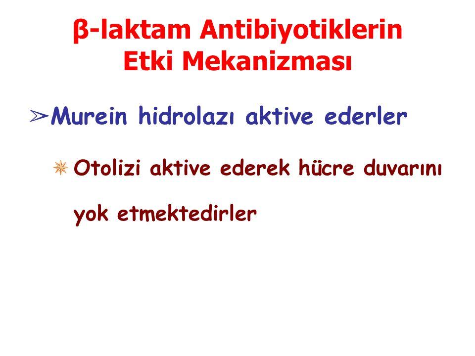 β-laktam Antibiyotiklerin Etki Mekanizması ➢ Murein hidrolazı aktive ederler ✵ Otolizi aktive ederek hücre duvarını yok etmektedirler