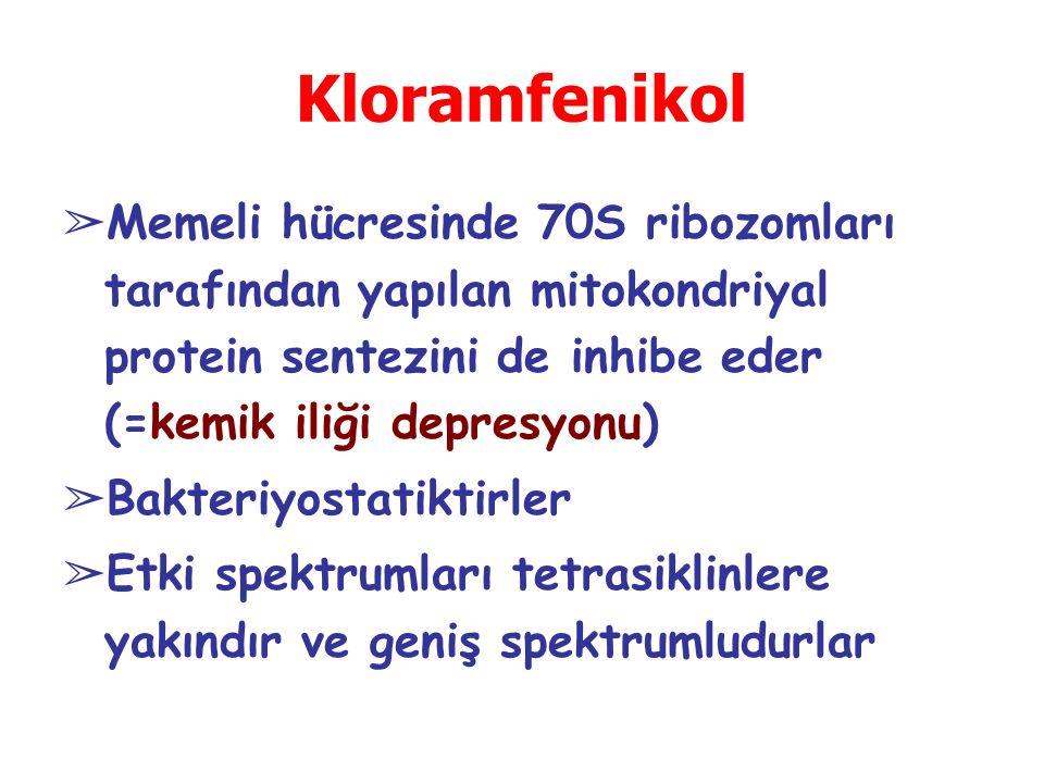 Kloramfenikol ➢ Memeli hücresinde 70S ribozomları tarafından yapılan mitokondriyal protein sentezini de inhibe eder (=kemik iliği depresyonu) ➢ Bakteriyostatiktirler ➢ Etki spektrumları tetrasiklinlere yakındır ve geniş spektrumludurlar