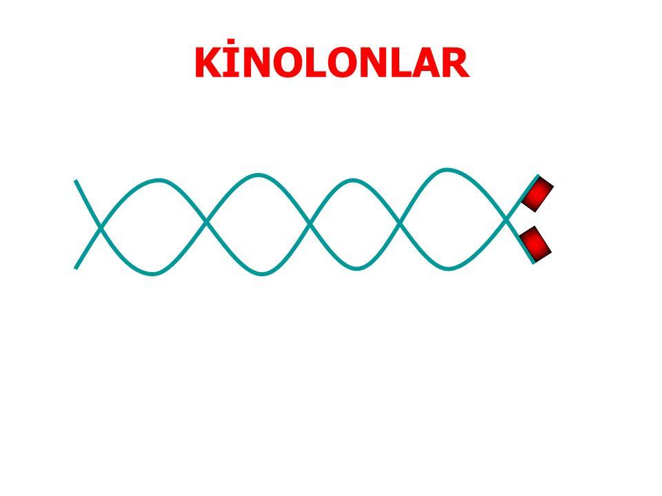 KİNOLONLAR