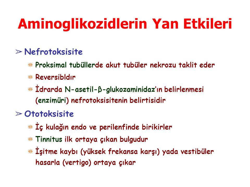 Aminoglikozidlerin Yan Etkileri ➢ Nefrotoksisite ✵ Proksimal tubüllerde akut tubüler nekrozu taklit eder ✵ Reversibldır ✵ İdrarda N-asetil-β-glukozaminidaz'ın belirlenmesi (enzimüri) nefrotoksisitenin belirtisidir ➢ Ototoksisite ✵ İç kulağın endo ve perilenfinde birikirler ✵ Tinnitus ilk ortaya çıkan bulgudur ✵ İşitme kaybı (yüksek frekansa karşı) yada vestibüler hasarla (vertigo) ortaya çıkar