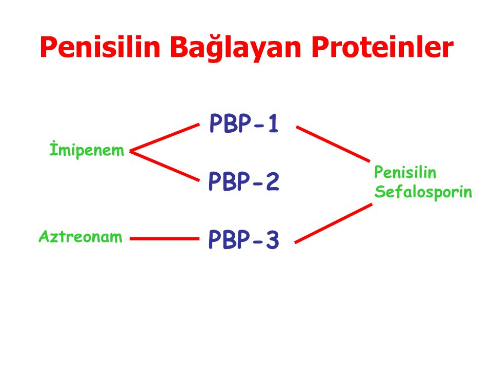 Penisilin Bağlayan Proteinler PBP-1 PBP-2 PBP-3 Penisilin Sefalosporin İmipenem Aztreonam