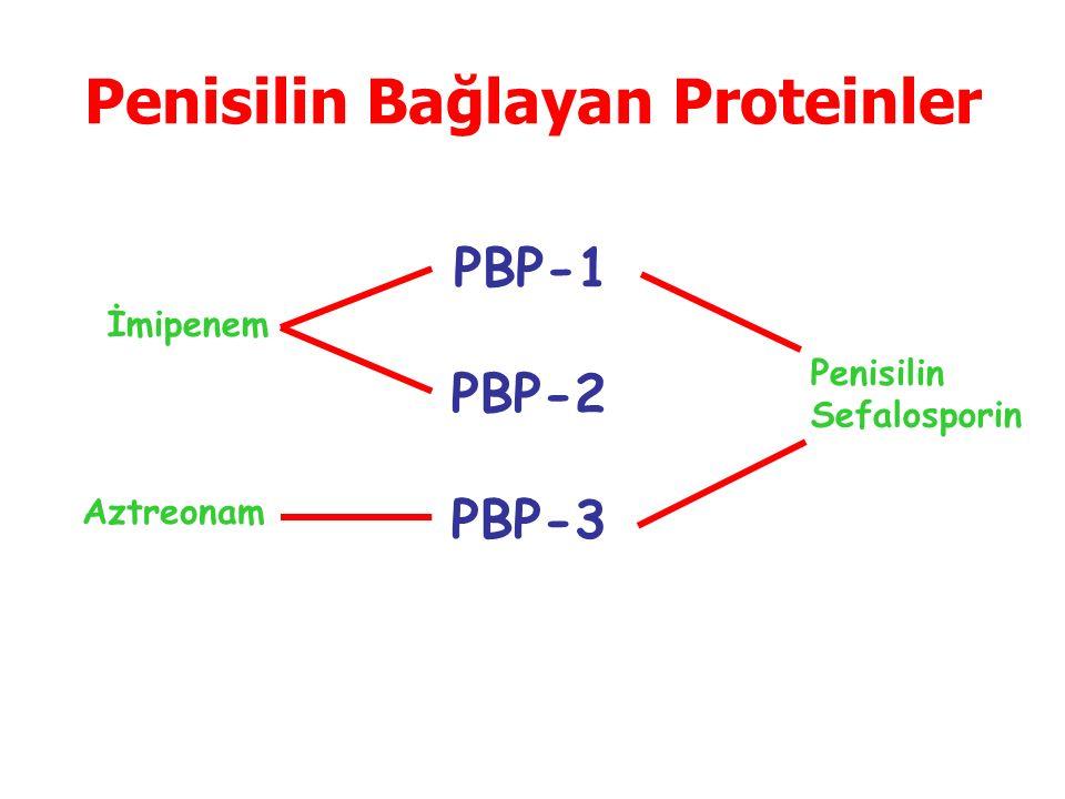 Penisilin: Metisilin Sefalosporin: Sefalotin Staf'a En Etkili