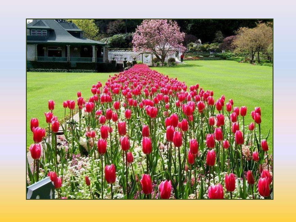E-mail: zuhalisikdag@gmail.com Web: http://zisikdag.weebly.com Butchart Bahçeleri videosunu You tube'da izlemek için: http://www.butchartgardens.com/planning-your-visit/the-5-seasons/the-5-seasons.html 23.12.2015