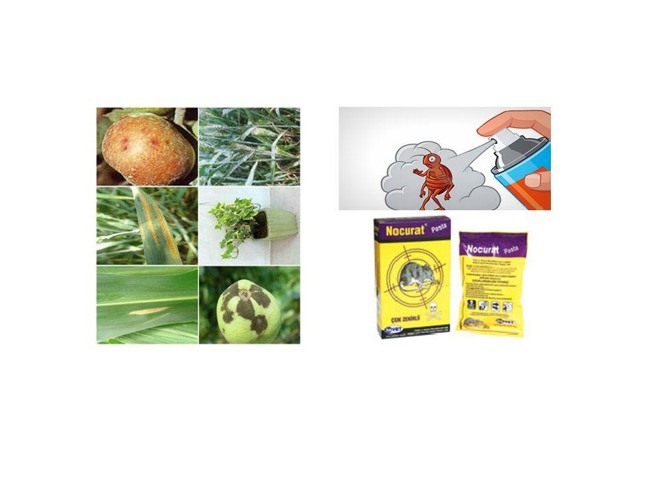 Pestisitler biyolojik birikimle canlıların vücutlarında yoğunlaşabilir (bioconcentration, bîomagnification).