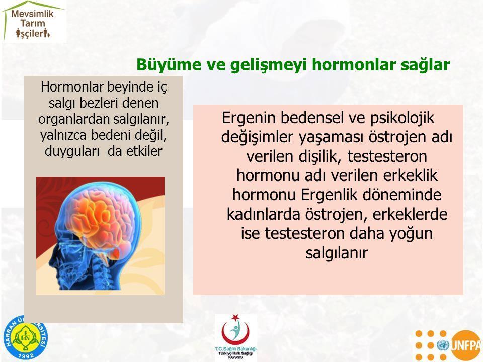 Büyüme ve gelişmeyi hormonlar sağlar Ergenin bedensel ve psikolojik değişimler yaşaması östrojen adı verilen dişilik, testesteron hormonu adı verilen erkeklik hormonu Ergenlik döneminde kadınlarda östrojen, erkeklerde ise testesteron daha yoğun salgılanır Hormonlar beyinde iç salgı bezleri denen organlardan salgılanır, yalnızca bedeni değil, duyguları da etkiler
