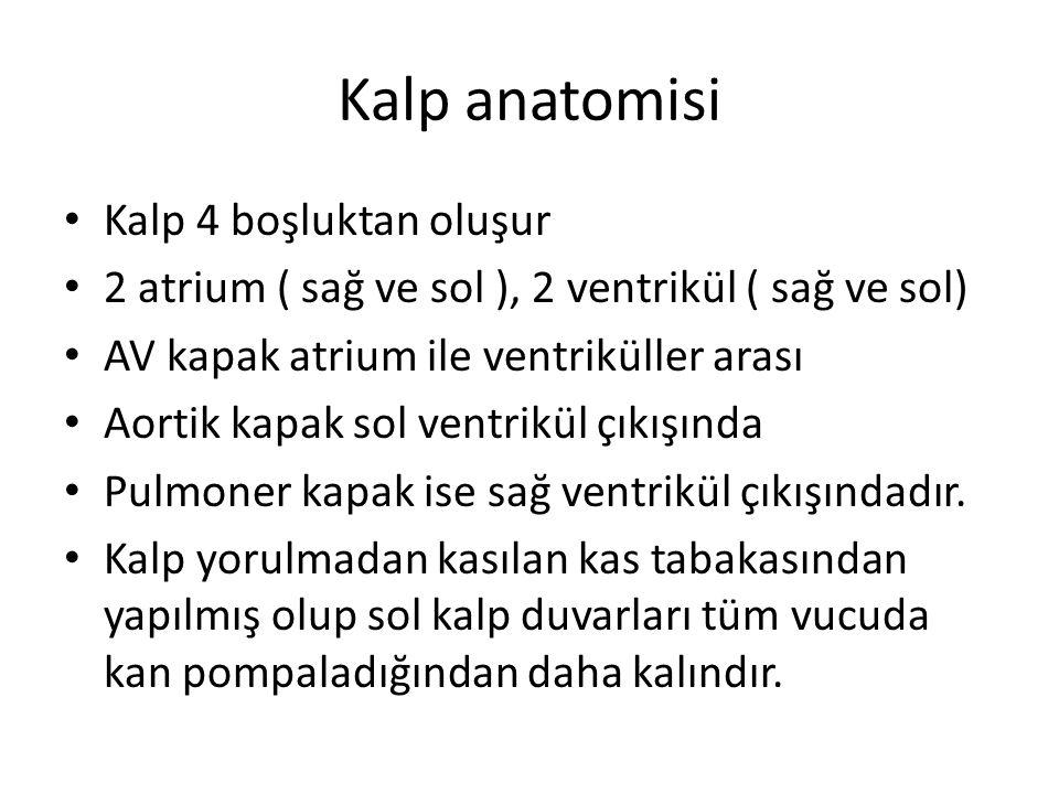 Abdominal aorta iki plan