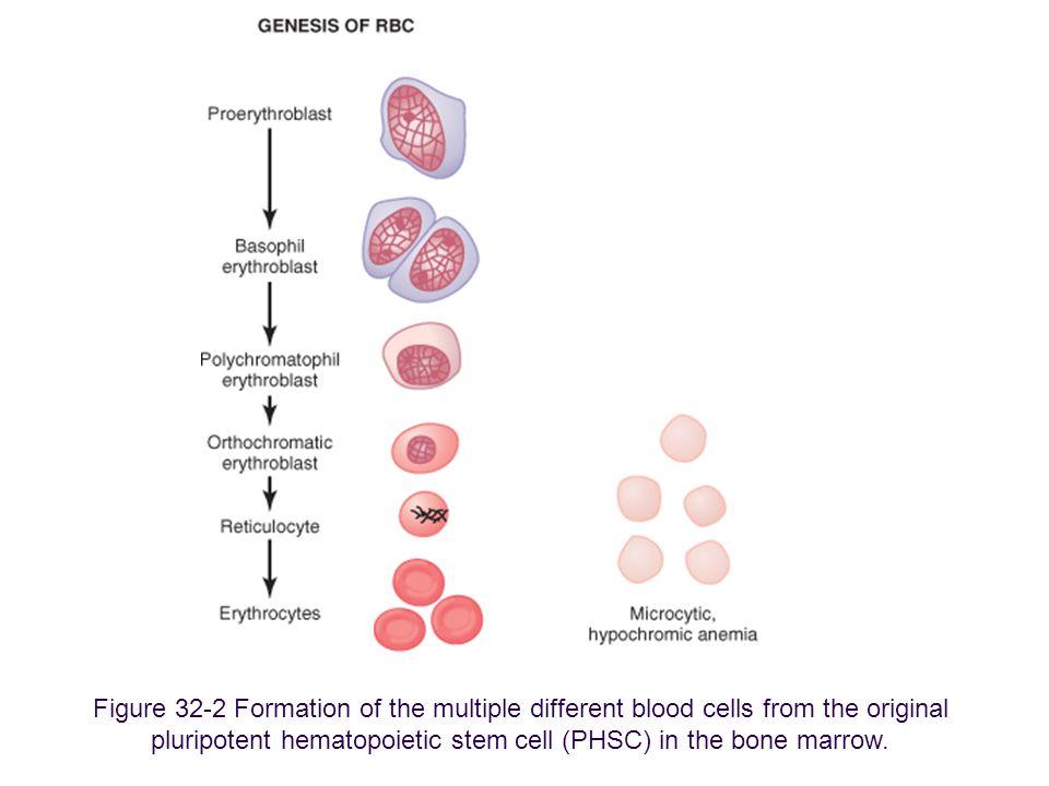 Kan Fizyolojisi (3)14 ANEMİNİN DOLAŞIM SİSTEMİ ÜZERİNE ETKİLERİ kan viskozitesi eritrosit konsantrasyonuna bağımlıdır.