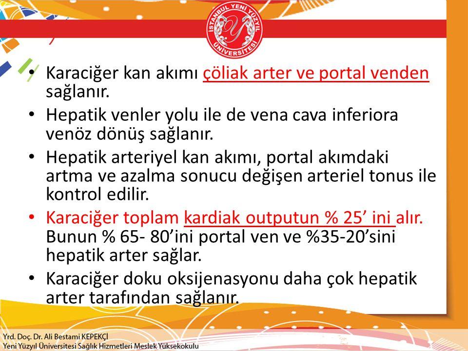 Karaciğer kan akımı çöliak arter ve portal venden sağlanır. Hepatik venler yolu ile de vena cava inferiora venöz dönüş sağlanır. Hepatik arteriyel kan