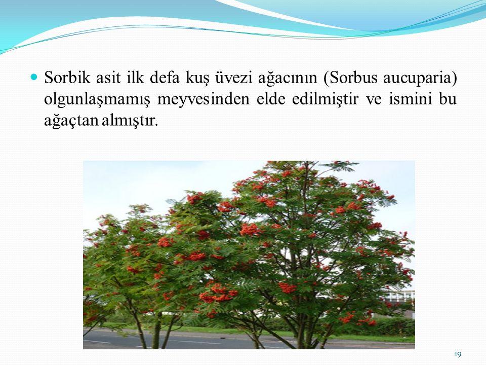 Sorbik asit ilk defa kuş üvezi ağacının (Sorbus aucuparia) olgunlaşmamış meyvesinden elde edilmiştir ve ismini bu ağaçtan almıştır. 19