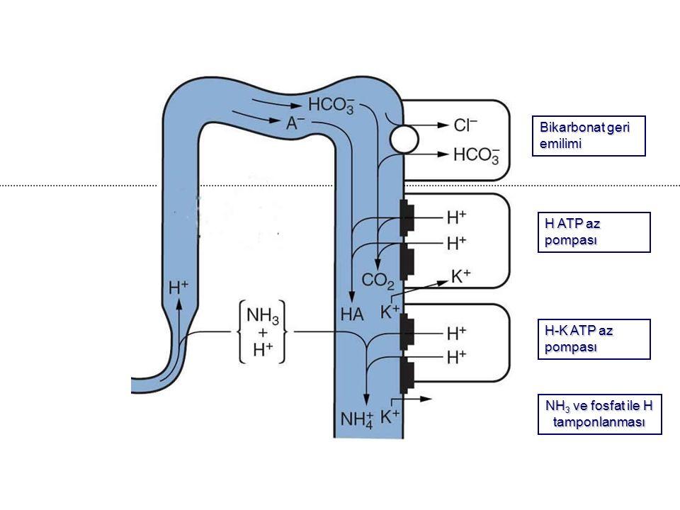 Bikarbonat geri emilimi H ATP az pompası H-K ATP az pompası NH 3 ve fosfat ile H tamponlanması