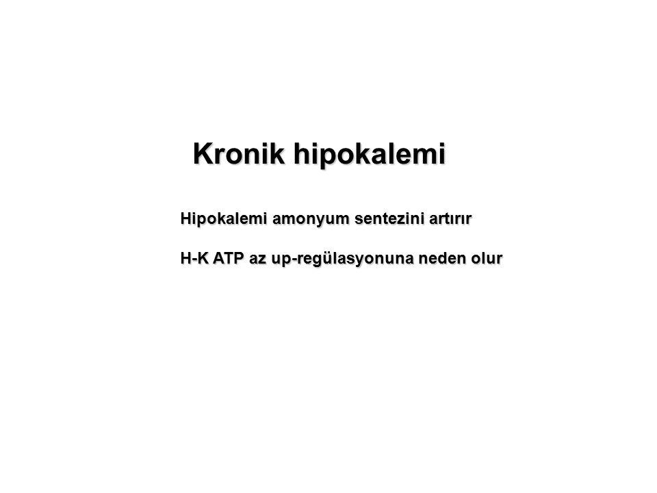 Kronik hipokalemi Hipokalemi amonyum sentezini artırır H-K ATP az up-regülasyonuna neden olur