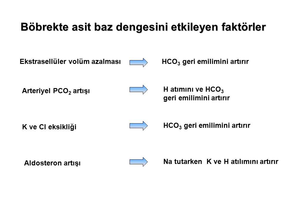 Böbrekte asit baz dengesini etkileyen faktörler Ekstrasellüler volüm azalmasıHCO 3 geri emilimini artırır Arteriyel PCO 2 artışı H atımını ve HCO 3 ge