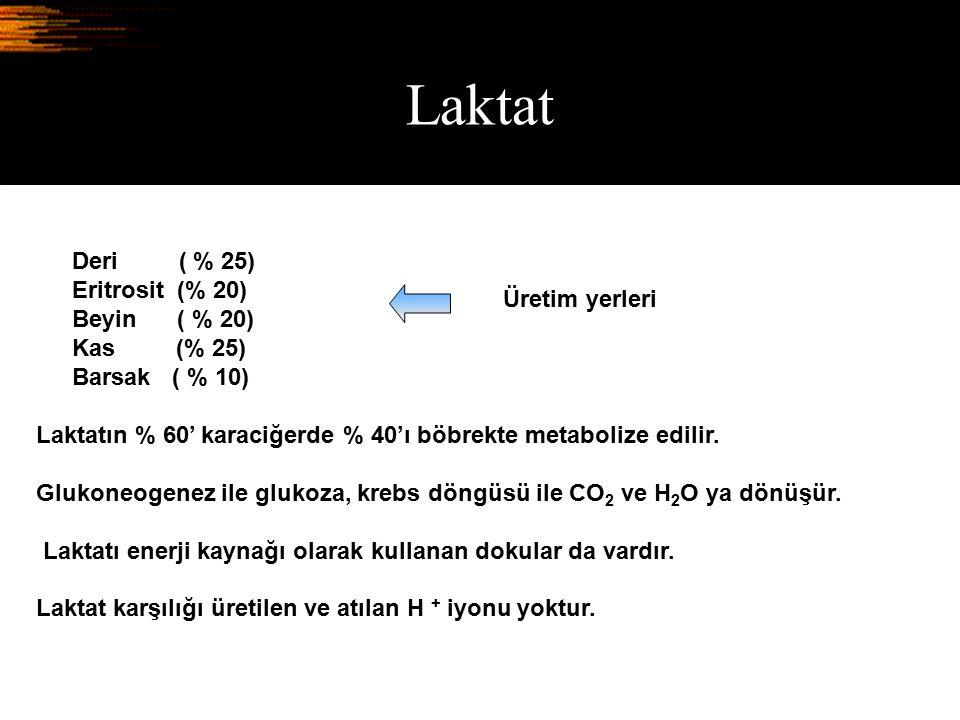 Laktat Deri ( % 25) Eritrosit (% 20) Beyin ( % 20) Kas (% 25) Barsak ( % 10) Laktatın % 60' karaciğerde % 40'ı böbrekte metabolize edilir. Glukoneogen