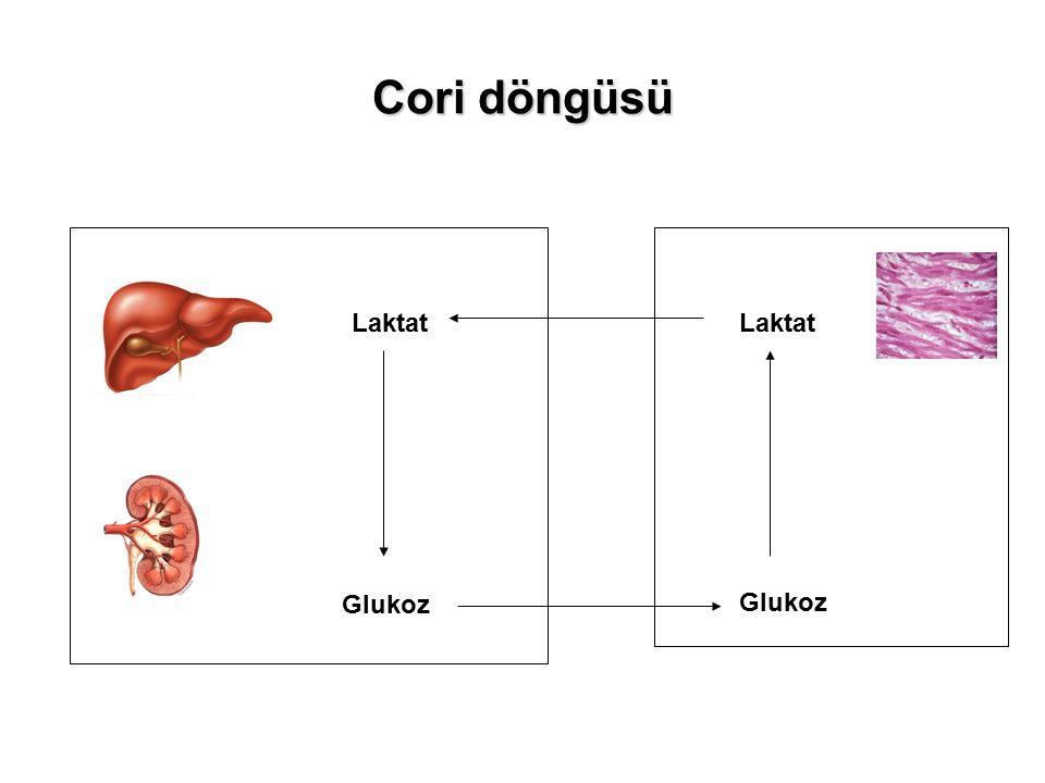 Cori döngüsü Laktat Glukoz Laktat