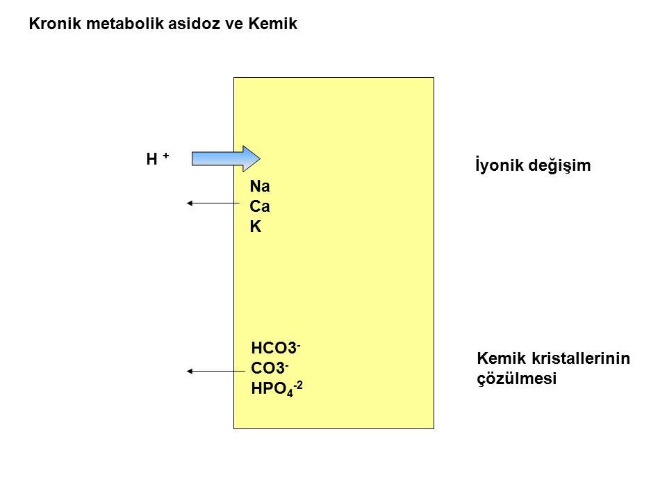 H + Na Ca K HCO3 - CO3 - HPO 4 -2 İyonik değişim Kemik kristallerinin çözülmesi Kronik metabolik asidoz ve Kemik