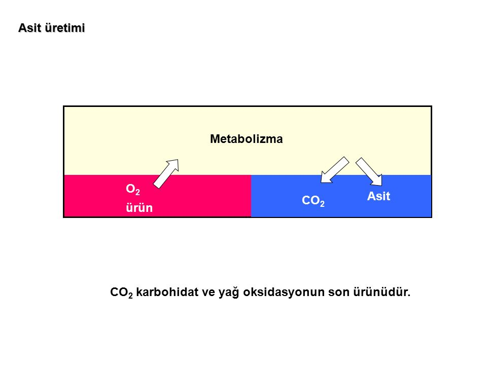 Metabolizma O2O2 ürün CO 2 Asit Asit üretimi CO 2 karbohidat ve yağ oksidasyonun son ürünüdür.