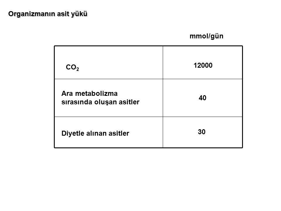 CO 2 12000 mmol/gün Ara metabolizma sırasında oluşan asitler Diyetle alınan asitler 40 30 Organizmanın asit yükü