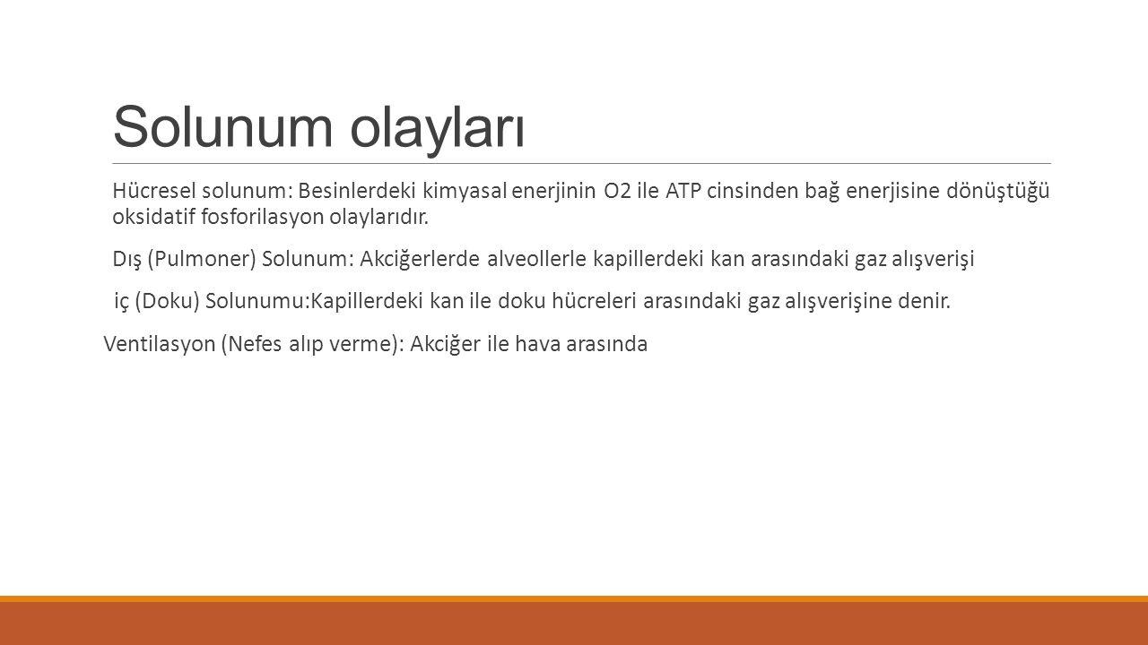 Solunum olayları Hücresel solunum: Besinlerdeki kimyasal enerjinin O2 ile ATP cinsinden bağ enerjisine dönüştüğü oksidatif fosforilasyon olaylarıdır.