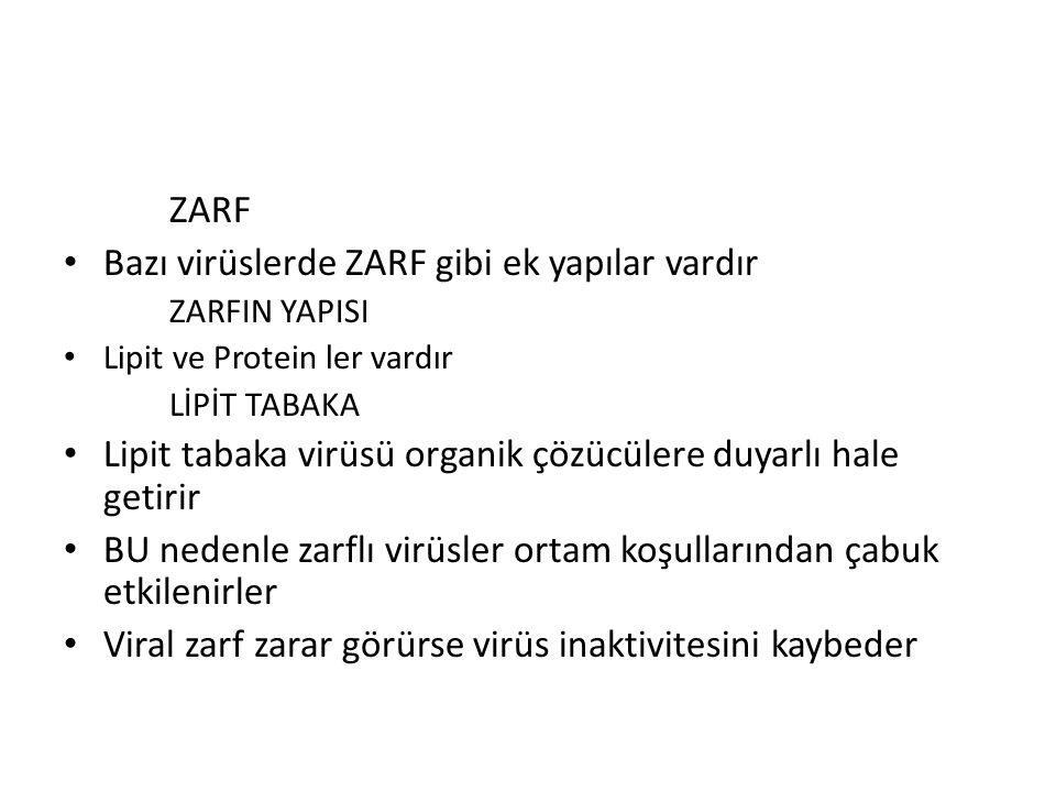 ZARF Bazı virüslerde ZARF gibi ek yapılar vardır ZARFIN YAPISI Lipit ve Protein ler vardır LİPİT TABAKA Lipit tabaka virüsü organik çözücülere duyarlı