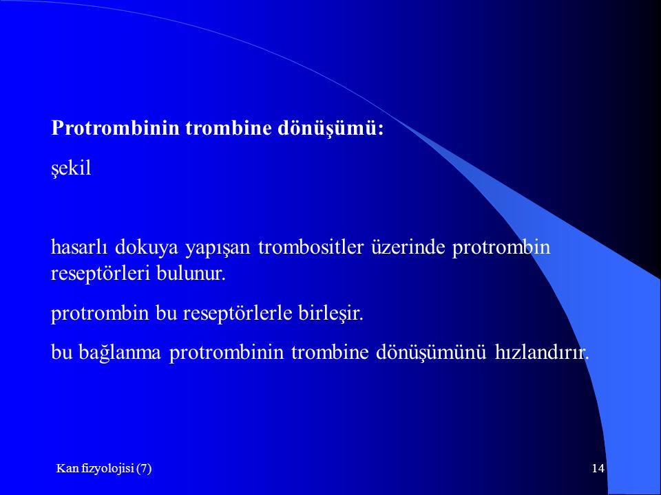 Kan fizyolojisi (7)14 Protrombinin trombine dönüşümü: şekil hasarlı dokuya yapışan trombositler üzerinde protrombin reseptörleri bulunur. protrombin b